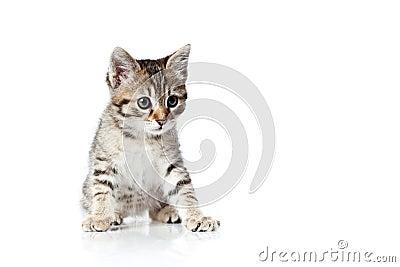 Big eyed little kitten
