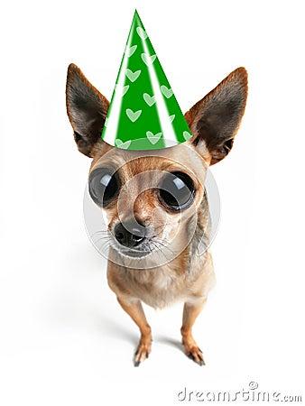 Big eyed party dog