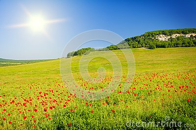 2Fstock Images Big Field Flowers Sunrise Image20720054ei8ZZeUrvHMoGziQKO2YH4DgpsigAFQjCNHGtSVgb2GKY UbucALYHaRxspRtgust1382017018926019