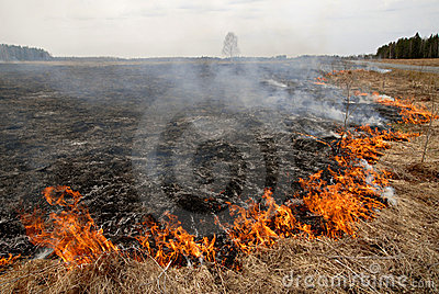 Big fire in the dry grass field.