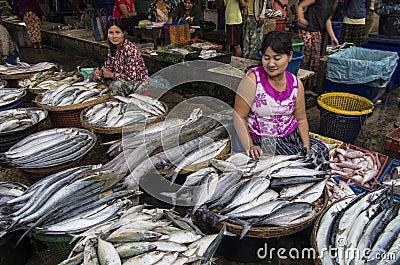 A big fish in MYANMAR - BURMA