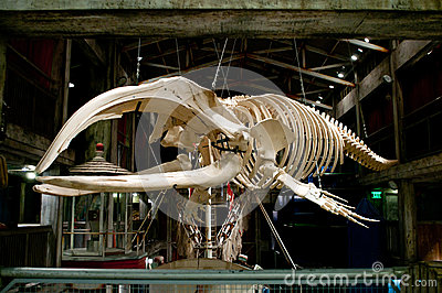 Big fish skeleton in Georgia Aquarium, Atlanta, U.S. Editorial Stock Image