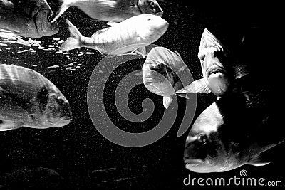 Big fishes 2