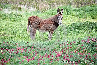 Big furry donkey