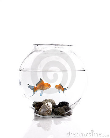 Free Big Goldfish Little Goldfish Royalty Free Stock Image - 4317666