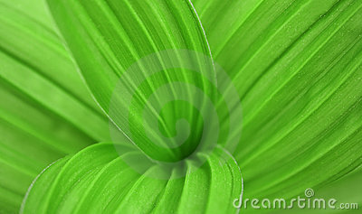 Big green leaf of a plant