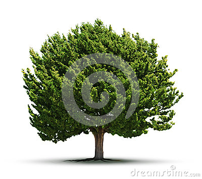 Free Big Green Tree Isolated Stock Image - 33601021