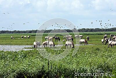 Big herd of wild horses