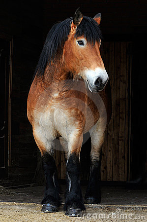 Free Big Horse Stock Photos - 14049543