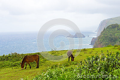 Big Island Hawaii landscape with ocean mist and horses