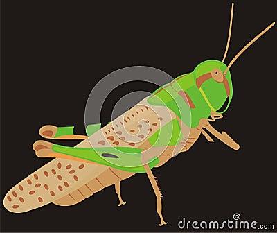The big locust