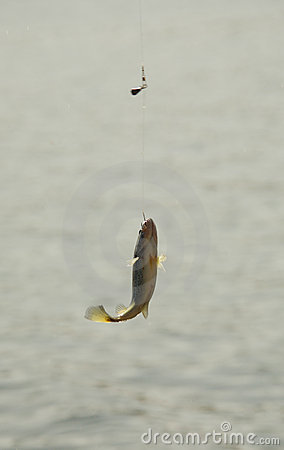 Big Mouth Bass Fish Hanging on a Hook