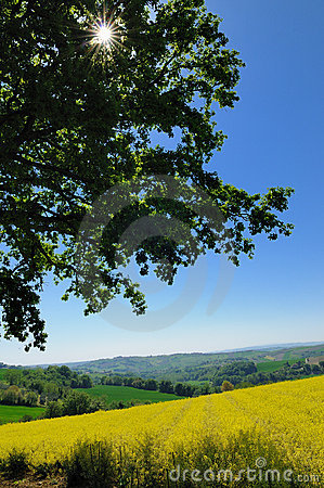 Free Big Oak In Countryside Stock Photography - 16810802