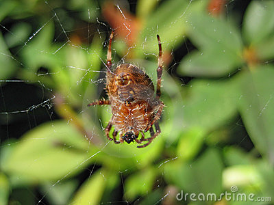 Big Ol Spider macro