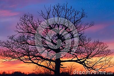 Big Ole Tree at Sunset