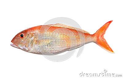 Big Orange Perch