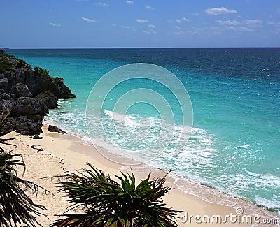 Big palm tree ashore