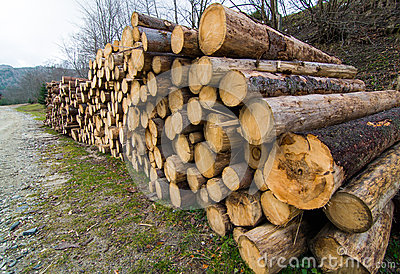 Big pile of wood in a forest road