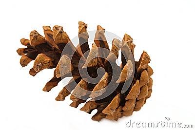 A big  pine cone