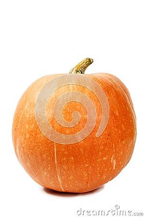 Big pumpkin isolated