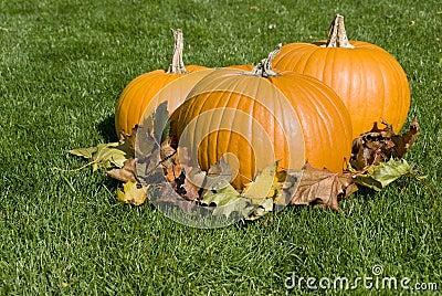 Big Pumpkins and Autumn Leaves