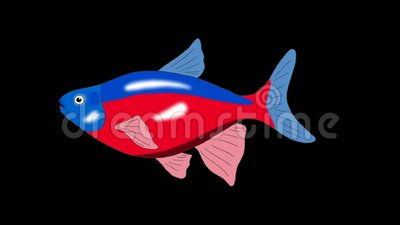 Red Blue Striped Aquarium Fish Alpha Matte Looped Stock Video