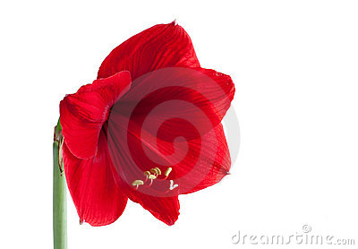 Big red flower 3
