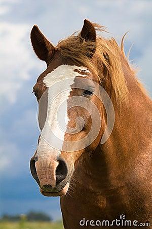 Free Big Red Horse Head Stock Photo - 25924850