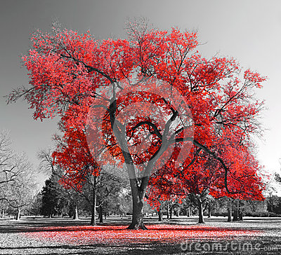 Free Big Red Tree Royalty Free Stock Image - 50763906