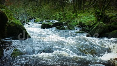 Big River In Ancient Forest. ACTUAL VIDEO IS VERY SHARP - Heavy flowing river through an old growth forest stock footage