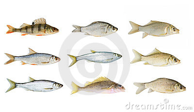Big river fish collection isolated