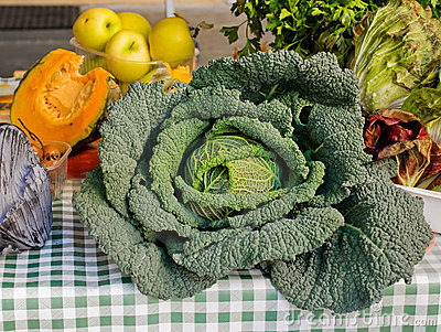 Big savoy cabbage