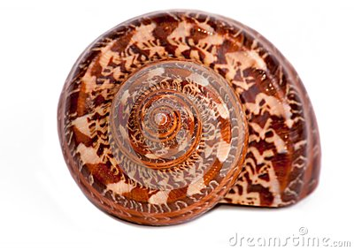 Big sea snail shell