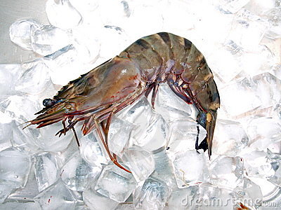 Big Sea Tiger Prawn Ice