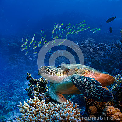 Free Big Sea Turle Underwater Royalty Free Stock Image - 28259746