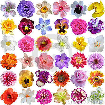 Free Big Selection Of Various Flowers Royalty Free Stock Image - 55923666