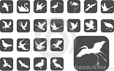 Big set buttons - 2_Z. Birds