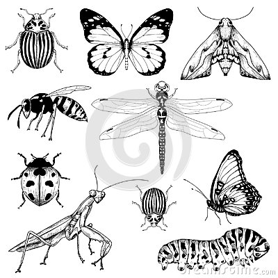 Free Big Set Of Vector Insects Graphic Stock Photos - 124345413