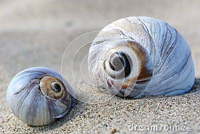 Big shells