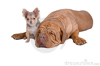 Big and small dogs friends