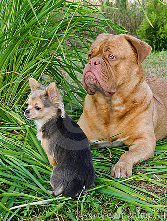 Big and small guard dogs friends in the garden