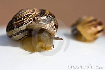 The big and small snails