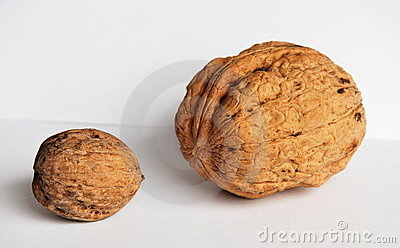 The big and small Walnuts