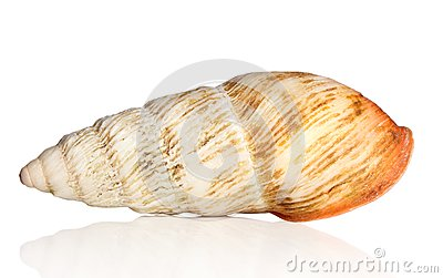 Big snail shell