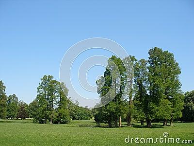 Big trees & blue sky