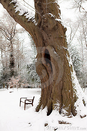 Big trunk in the snow