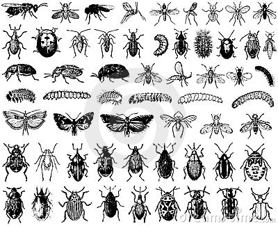 Big vector collection of insects