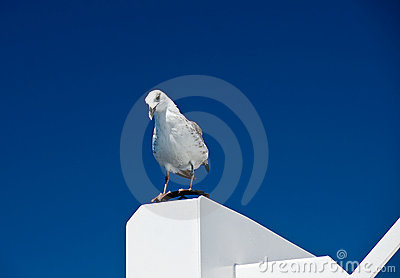 Big white seagull on blue sky background