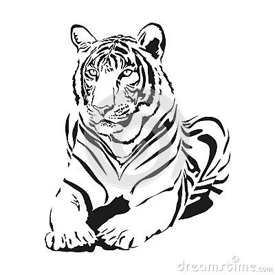 Big wild cat
