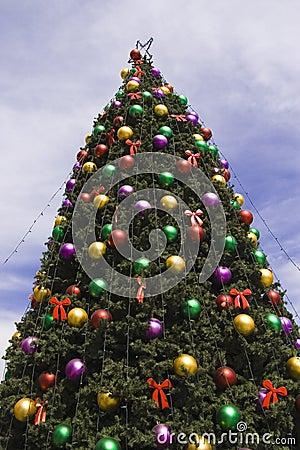 Big xmas tree